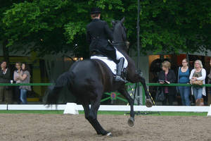 Dressage Canter Pirouette Stock 02 by LuDa-Stock
