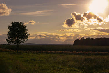 Meadow Pasture Landscape 2 by LuDa-Stock