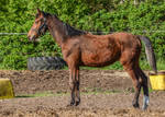 Conformation - Lanky Yearling II by LuDa-Stock