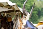 Bovine Skull Medieval Market Fur by LuDa-Stock