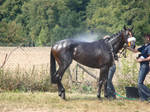 Everyday Stock - Wet Thoroughbred Race Horse by LuDa-Stock