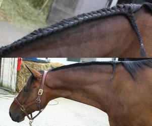 Horse Mane Braid by LuDa-Stock