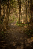 Coast Forest Path Stock by LuDa-Stock