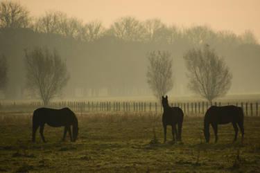 Black Horses in Fog by LuDa-Stock