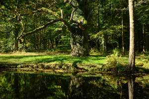 Enchanted Forest Oak Tree at Lake - Summerly 03 by LuDa-Stock