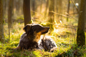 Mossy Forest Sheperd Dog II by LuDa-Stock