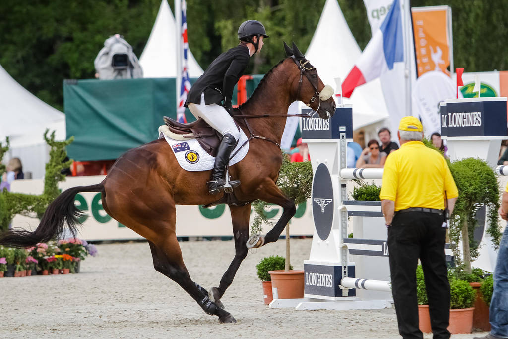 3de Show Jumping Phase Bitless Stock 42 By Luda Stock On