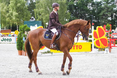 Irish Sport Horse Gelding Clover Walk Stock 2 by LuDa-Stock