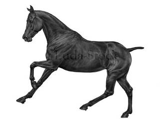 Eventer Gallop Greyscale by LuDa-Stock