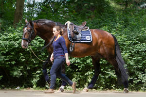 Groom leading Lusitano after Training by LuDa-Stock