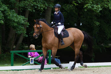 Muscular Show Jumping Horse Stock by LuDa-Stock