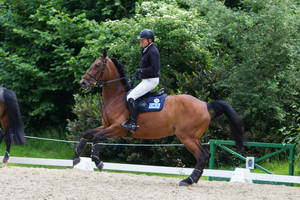 Horse Bolting Disobedience Prep Arena 1 by LuDa-Stock
