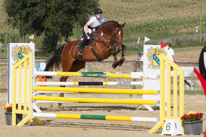 Level 5 Showjumping - L-Springen 46 huge horse by LuDa-Stock
