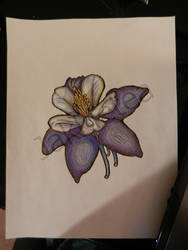 Colored Columbine by BlackVioletsAreReal
