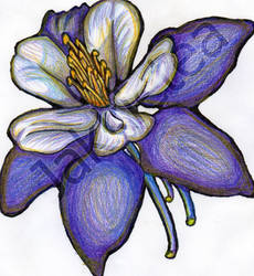 Scanned Columbine by BlackVioletsAreReal