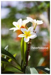 heartsease by Shikaz