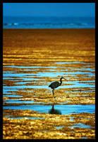 Solitary by Shikaz