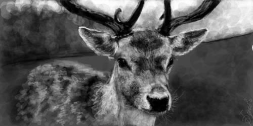 cute deer by buketGvozdei