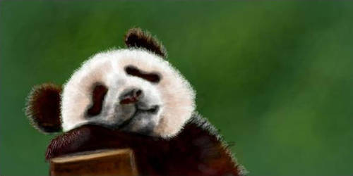 cute panda by buketGvozdei