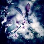 Fleurs by VexingArt