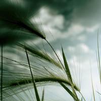 Grass dripping by VexingArt