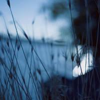 Grass by VexingArt