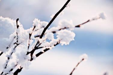 Snowy branches by RasmusLuostarinenArt