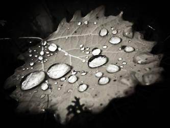Drops on leaf by RasmusLuostarinenArt