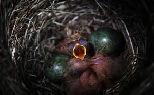 Baby chicks by RasmusLuostarinenArt