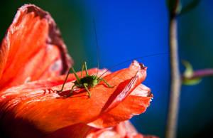 The Kingdom of Grasshoppers by RasmusLuostarinenArt
