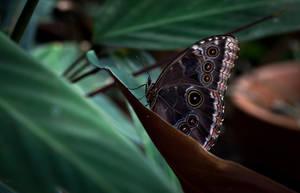 Butterfly in the jungle by RasmusLuostarinenArt