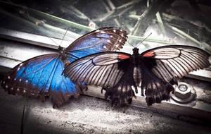 Butterflies by RasmusLuostarinenArt