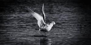 Gull's landing by RasmusLuostarinenArt