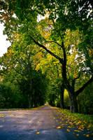 Enchanting autumn by RasmusLuostarinenArt