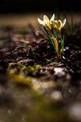 Spring evening by RasmusLuostarinenArt