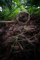 The Life as Hedgehogs by RasmusLuostarinenArt
