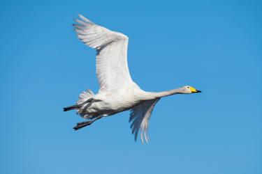 Spread your wings by RasmusLuostarinenArt