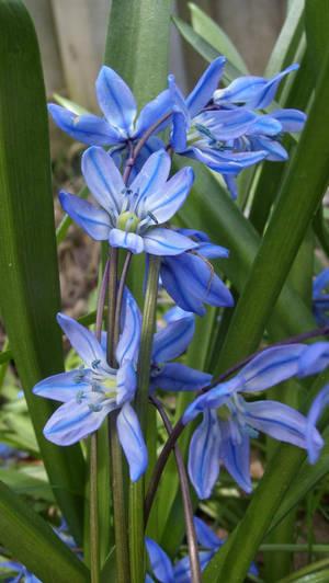 Little Blue Flowers by sfaber95