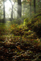 forest by snake6630
