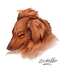 Weenie Sketch by LockStockCreation