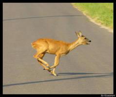 Run run run by Kyasanuri