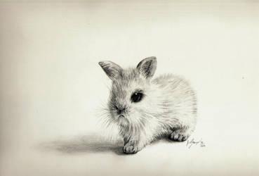Tiny bunny by Mishice