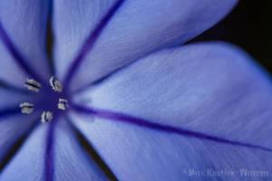 Macro Flower by MaxK-W
