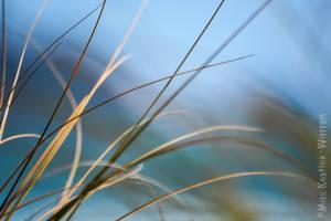Beach Grass 1 by MaxK-W