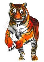 Running Tiger by GabrielGrob