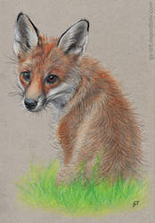 Fox Cub by GabrielGrob
