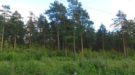 Forest near village Dunai: Stock Photo by ShizukaTW