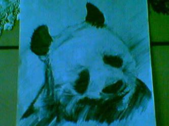 panda by orlong