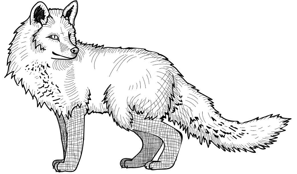Standing Fox Illustration by blueshywolf124