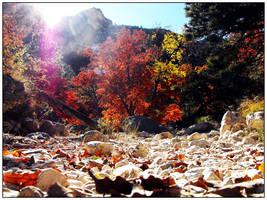 Fall's Rainbow by mackattack23